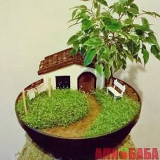 Мини Сад в горшке