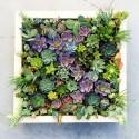 Живая картина из растений