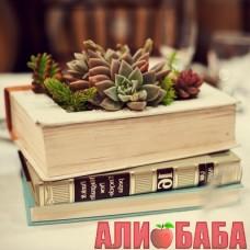 Суккуленты в книге