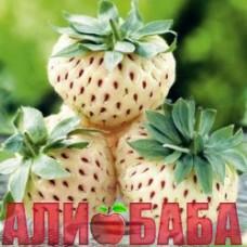 Клубника садовая Анабланка