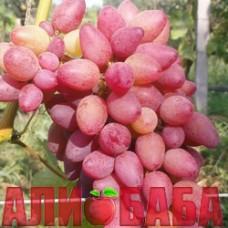 Виноград розовый Арго