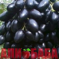 Виноград черный Надежда Азос