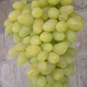 Виноград белый кишмиш Долгожданный