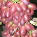 Виноград розовый Дунав