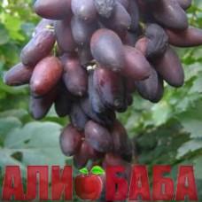 Виноград черный Кармен