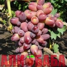 Виноград розовый Красотка