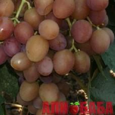 Виноград розовый Одиссей