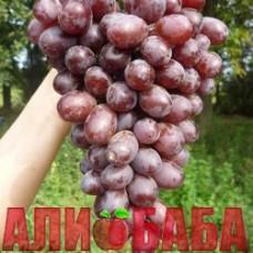 Виноград розовый Шоколадный