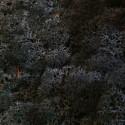 Черный стабилизированный мох