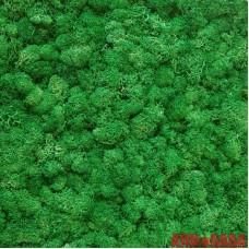 Зеленый ТРАВЯНОЙ стабилизированный мох ягель