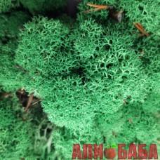 Зеленый ТРАВЯНОЙ темный стабилизированный мох ягель