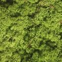ЗЕЛЕНЫЙ светлый стабилизированный мох ягель