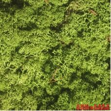 ЗЕЛЕНЫЙ стабилизированный мох