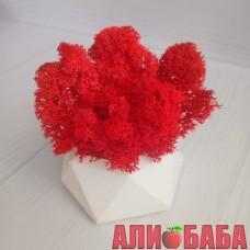 Кашпо Алмаз со мхом красного цвета