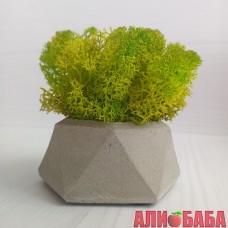 Кашпо Алмаз со мхом весеннего цвета