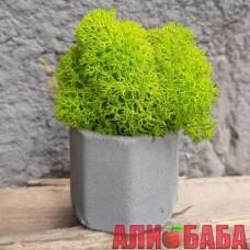 Кашпо Бочка со мхом весеннего цвета