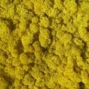Желтый ЛИМОННЫЙ стабилизированный мох ягель