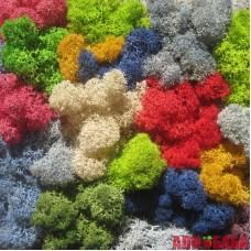 МИКС цветов стабилизированный мох ягель