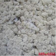 НАТУРАЛЬНЫЙ стабилизированный мох ягель