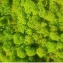 Зеленый ВЕСЕННИЙ стабилизированный мох