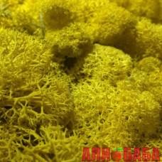 Желтый стабилизированный мох