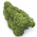Мох стабилизированный Зеленый средний - ветка