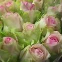 Роза Эдвенче