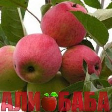 Яблоня Богемия
