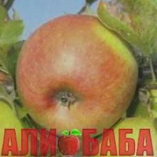 Яблоня Дельбар Жубиле (Юбилейный Дельбара)
