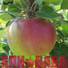 Яблоня Делькорф (Дельбарестиваль)