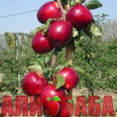 Яблоня Моди