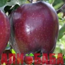 Яблоня Рояль Ред Делишес