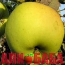 Яблоня Спайс Голд