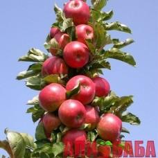 Яблоня колоновидная Джин (КВ-5)