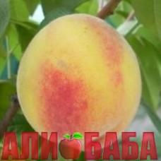 Персик Княже Золото