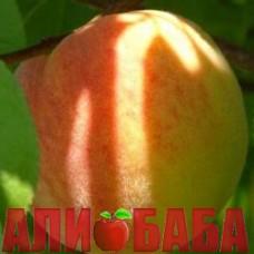 Персик Солнечный
