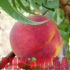 Персик Топ Свит