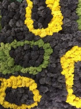 стабилизированный мох черный
