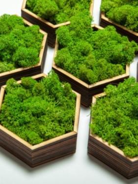 стабилизированный мох зеленый