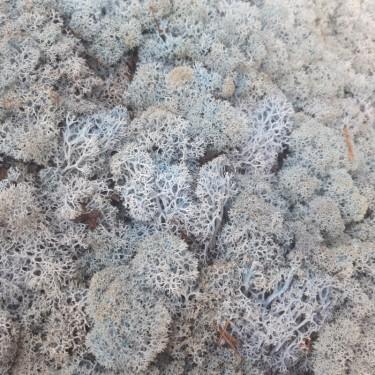 стабилизированный мох ледяной