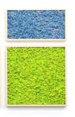 стабилизированный мох лавандовый