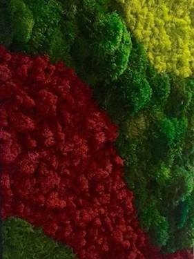 стабилизированный мох красный