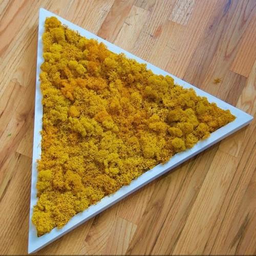 желтый мох